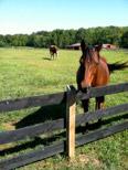 Camp Horse